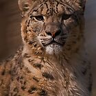 Snow Leopard Portrait v2 by JMChown