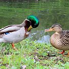 Preening Duck (Mallard) by vitez-art