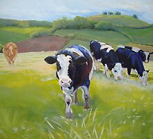 Holstein Friesian Cows in Countryside with hills and hedges by MikeJory