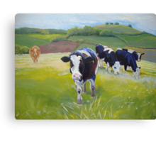 Holstein Friesian Cows in Countryside with hills and hedges Canvas Print