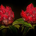 Rhododendron by Svetlana Sewell