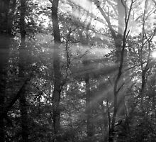 Sunrays Through the Trees in Black and White by Natalie Kinnear