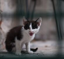 Meow! by Anete Bauere