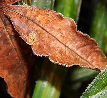 Maple Leaf by WildestArt