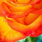 A Rose&#x27;s Closeup by Eden R. Ellis