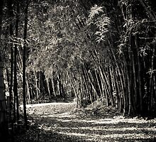 Bamboo pathway by Phil  Hatcher
