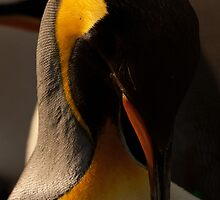 Emperor Penguin Grooming by beardyrob