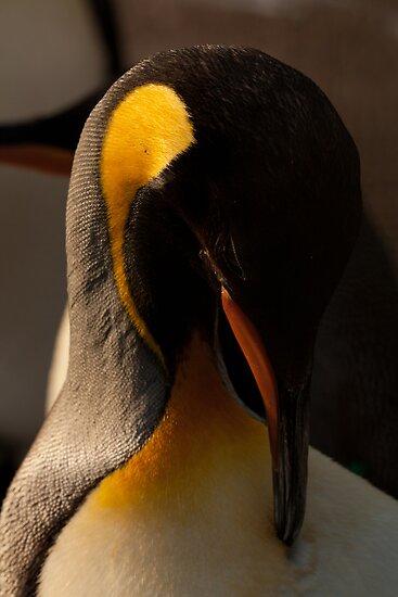 Emperor Penguin Grooming by beardyrob