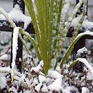 Snow, Ice and Greenery by Sandra Lee Woods