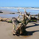 Driftwood on the 4WD Beach, NSW by aussiebushstick