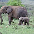elephant mother and baby by LSPJS