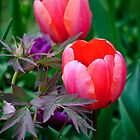 A Tulip And Other Leaves II by Diego  Re