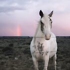 Horse After a Storm by Heidi Hermes