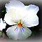 *AVATAR/PANSIES - Gorgeous Flower Cards*