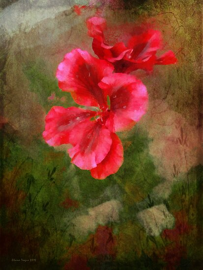 Pelargonium #3 by Elaine Teague