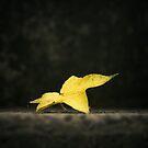 Autumn has fallen by Nicole Wells