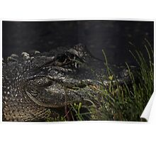Alligator, As Is : ) Poster
