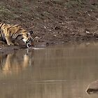 Tiger drinking at the water hole by Yves Roumazeilles