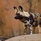 Dog-gone-it I Look Good by Jeff Weymier