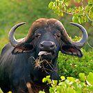 Whadya starin at? by Explorations Africa Dan MacKenzie