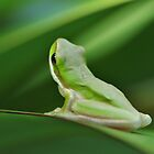 Little Green Frog by lib225