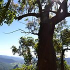 Lookout at Binna Burra by TheaShutterbug