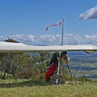 Waiting his turn, Mt Tamborine, Qld, Australia - Panorama by Margaret  Hyde