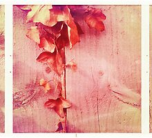 Cambridge Collection: Pink Ivy by Sybille Sterk