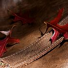 Of Leaf and Leather by Vince Russell