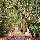 Blakiston Driveway by Barb Leopold