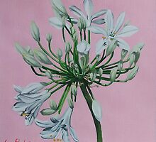 White Agapanthus - 2010 by Sue Flask