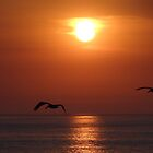 Sailing in the Setting Sun - Volando en el Sol by PtoVallartaMex
