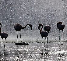 Flamingos at the Geysir of Lake Bogoria by Henry Jager