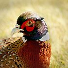 Pheasant Running Free by Corri Gryting Gutzman