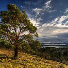 Hillside by Don Guindon