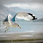 Seagull Landing by Corri Gryting Gutzman