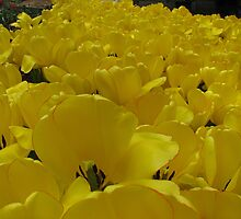 Yellow hearts! by rasim1