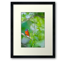 Painted Bunting at the Tree Farm Framed Print