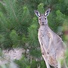 A sweet new Visitor, Autumn, Mount Pleasant, S.A. by Rita Blom