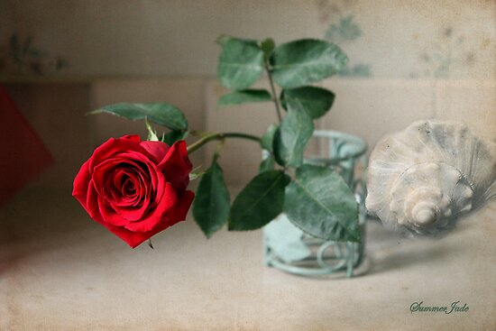 A Rose ~ In the Light of Early Morn by SummerJade
