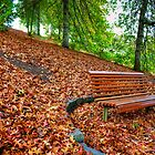 A bench surrounded by leaves at Mt Lofty Botanic Gardens by Elana Bailey
