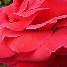 Red Glamorous Petals  by EdsMum