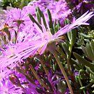 pretty in pink  by Jan Stead JEMproductions