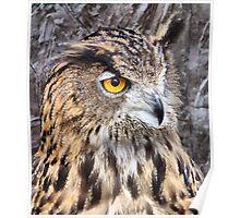 Eurasian Eagle Owl. Poster