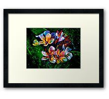 Frangipani....A Touch of Frost... Framed Print