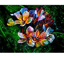 Frangipani....A Touch of Frost... Photographic Print