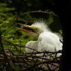 Three Week Old Great White Egret on Nest by Joe Jennelle