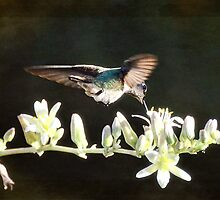 Morning Nectar Flyby  by Saija  Lehtonen