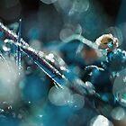 Sparkling dew by lorrainem