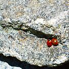 Ladybirds...in love? by LucyM78